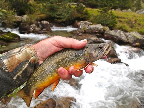 Austrian Brook Trout taken on a Foam Ant