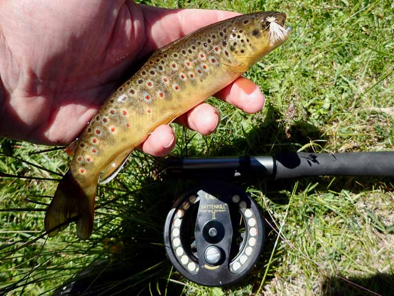 close range fishing with the sunray zero tenkara hybrid fly rod