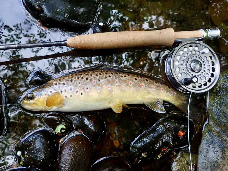 North Yorks Moors aphid-feeder, 1 weight rod & 1 weight Jeremy Lucas line