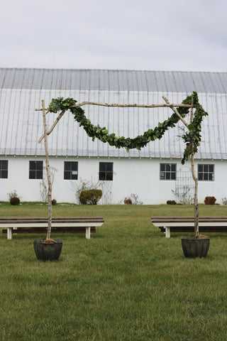 Decor - Birch Arbor - Main Street Weddings & Events