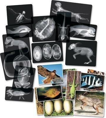 Animal X-Rays - Set of 14 - louisekool