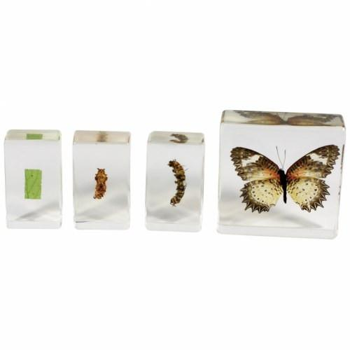 Butterfly Life Cycle Specimen Set of 4 - louisekool
