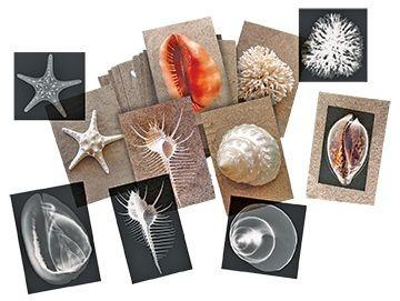 Discover The Beauty of Seashells - louisekool