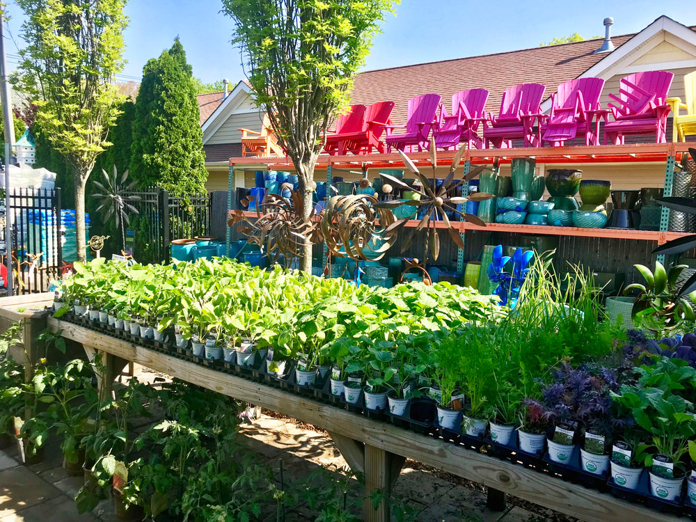 Long Island Garden Center & Nursery | Bay Gardens