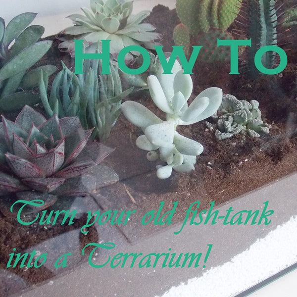 DIY: How to Turn your Old Fish-Tank Into a Terrarium