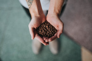 Hands holding roasted coffee beans.
