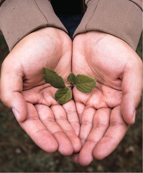Cupped hands holding a small tree sprout.