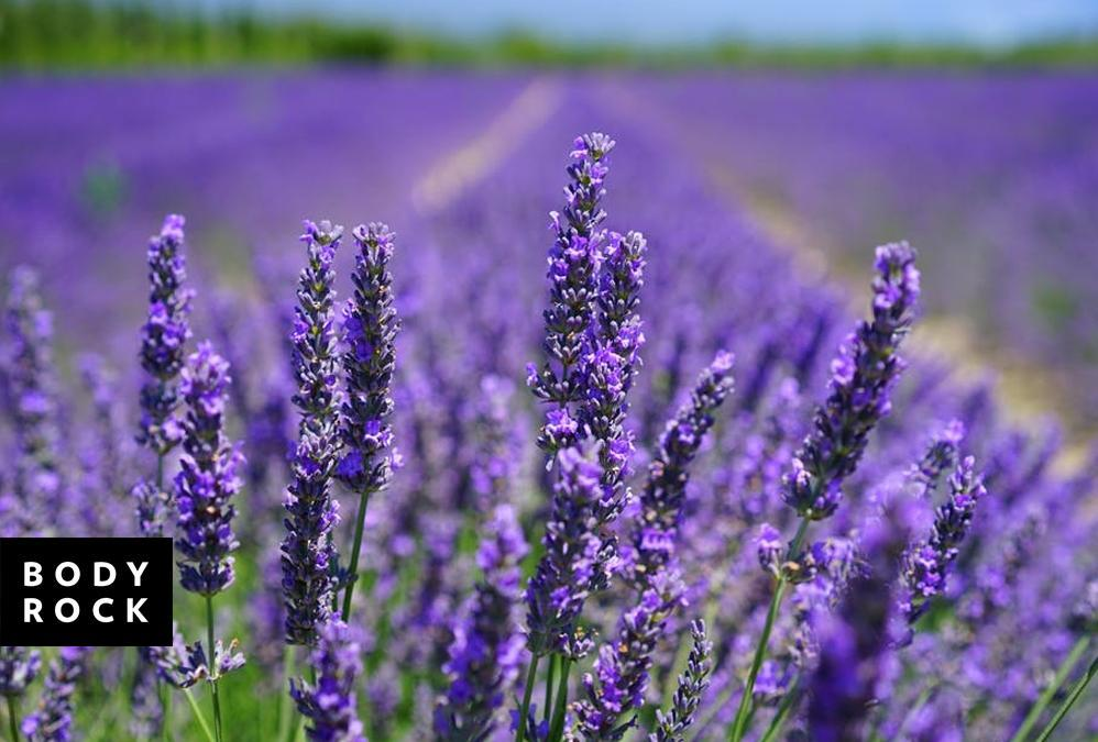Losing Weight Naturally: How Lavender Oil Pills Can Help