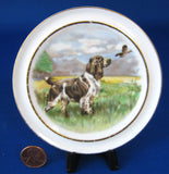 Dog Pin Dish English Bone China Springer Spaniel Sweet 1950s Plate