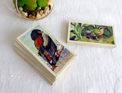 Tea Card Set Tropical Birds Brooke Bond P G Tips 1974 Full Set Plus Duplicates