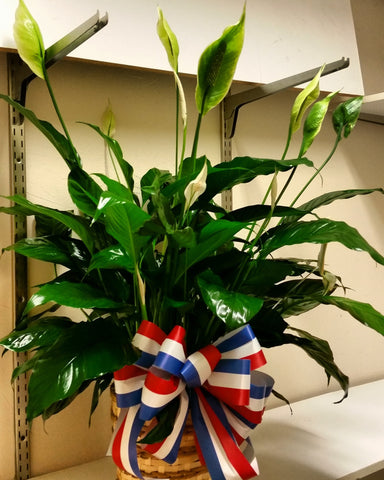 Green Plant (Patriotic Ribbon)