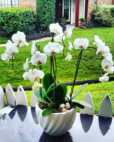 """Happy Orchids"""