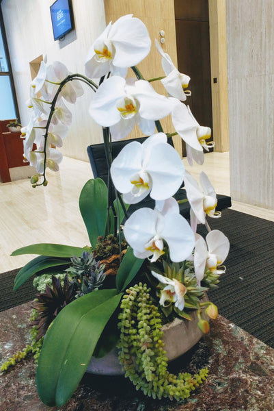 """Steps of Life"" Orchid Arrangement"