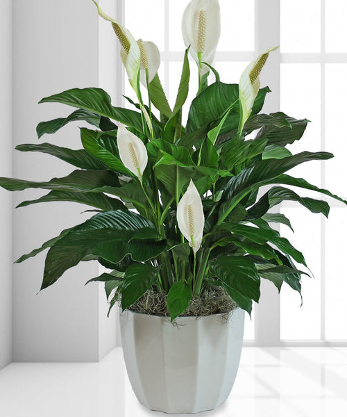 """Lillies Blossom"" Arrangement."
