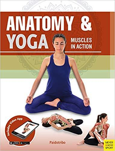 Anatomy & Yoga: Muscles in Action