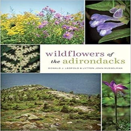 Wildflowers of the Adirondacks