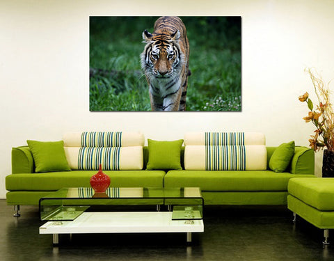 canik146 Canvas Print Stretched tiger big cat predator 26x43""