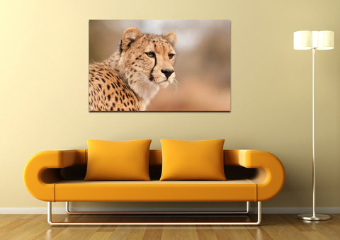 canik147 Canvas Print Stretched Africa cheetah big cat predator 26x42""