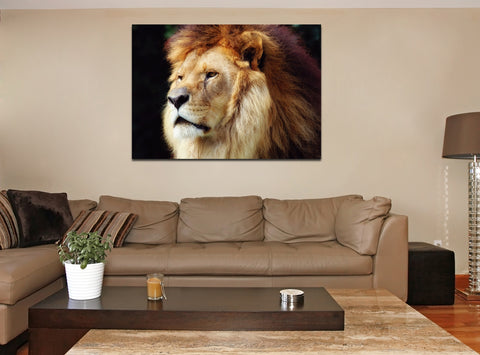 canik149 Canvas Print Stretched lion big cat predator 26x38""