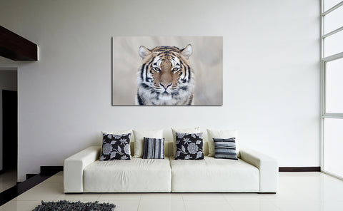 canik151 Canvas Print Stretched Indian tiger big cat predator 26x43""
