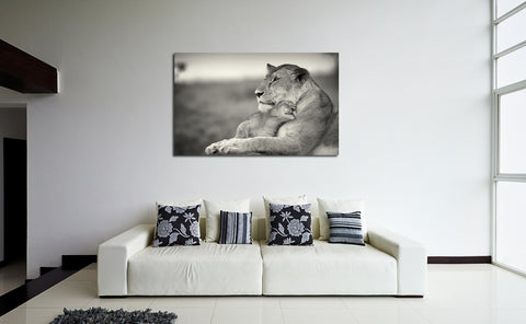 canik153 Canvas Print Stretched lioness young lion Pride big cats 26x43""