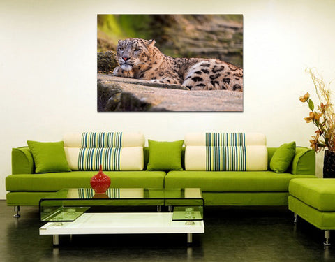 canik157 Canvas Print Stretched snow leopard mountain big cat 26x40""