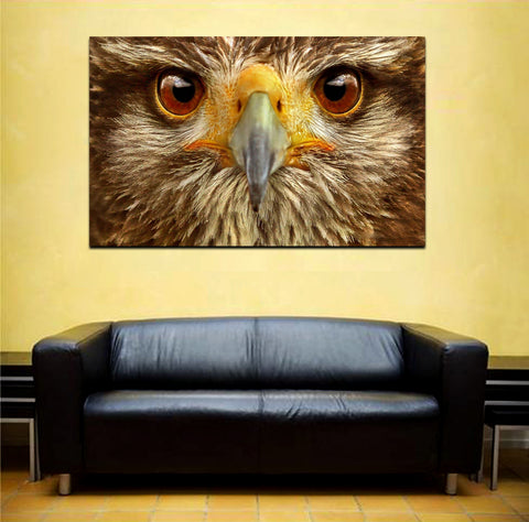canik159 Canvas Print Stretched falcon head predator bird 26x43""