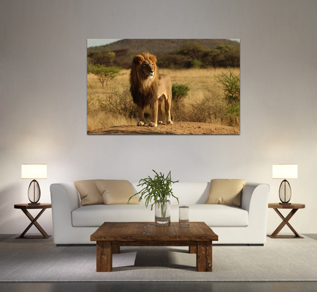 canik164 Canvas Print Stretched African savannah lion big cat animal 26x43""