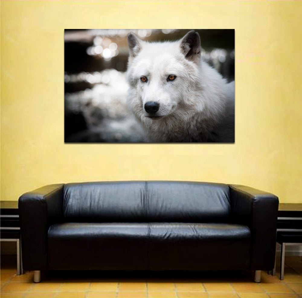 canik165 Canvas Print Stretched white wolf alpha predator animal 26x40""
