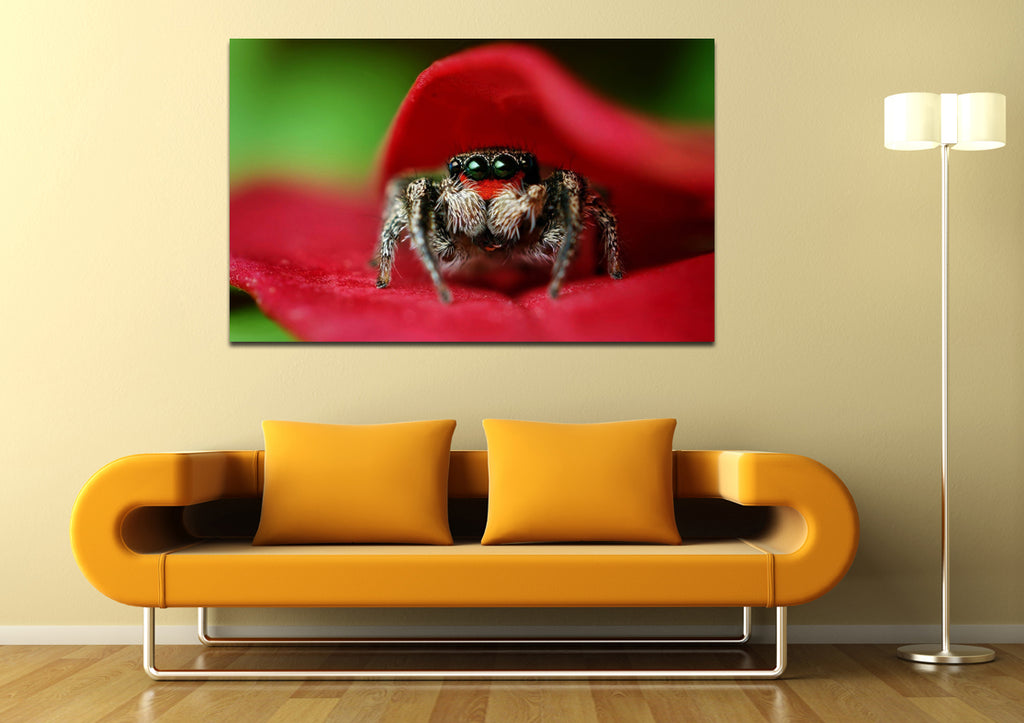 canik173 Canvas Print Stretched jumping spider flower 26x43""