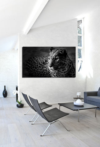 canik20 Canvas Print Stretched Wrapped Africa leopard predator Cat 26x48""