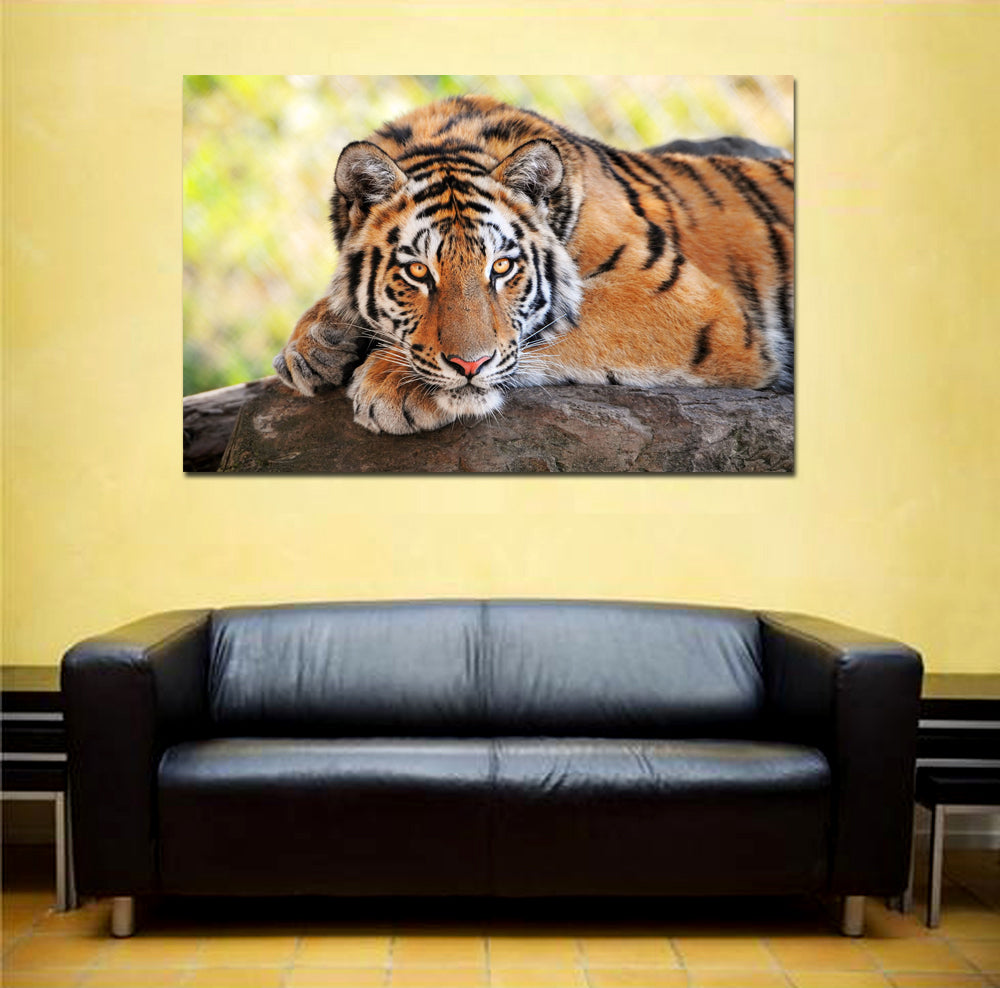 canik96 Canvas Print Stretched Wrapped Bengal tiger animal big cat 26x41""
