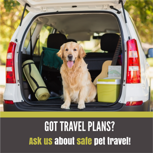 How We Can Help You Travel Safely with Your Pet