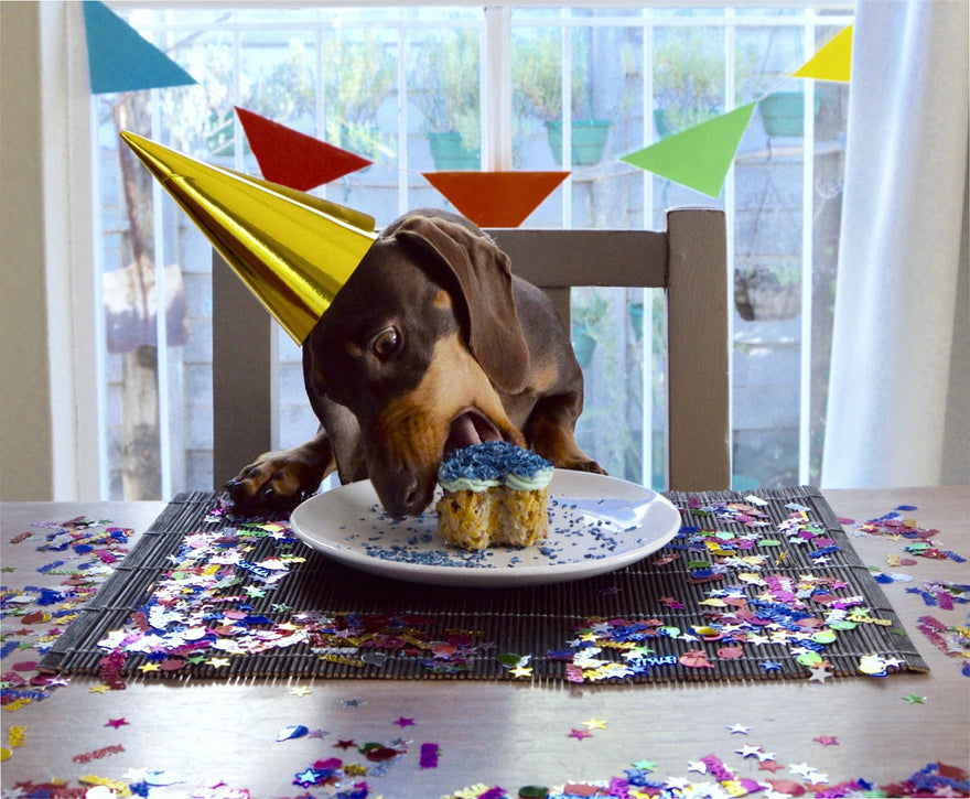 What To Serve Your Dog For Their Birthday Pawsome Doggie