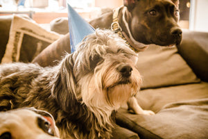 Dog Birthday Party Etiquette