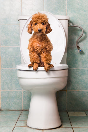 Pet Parent Hacks for Picking Up Poop