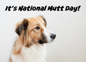 What is a Mutt? National Mutt Day
