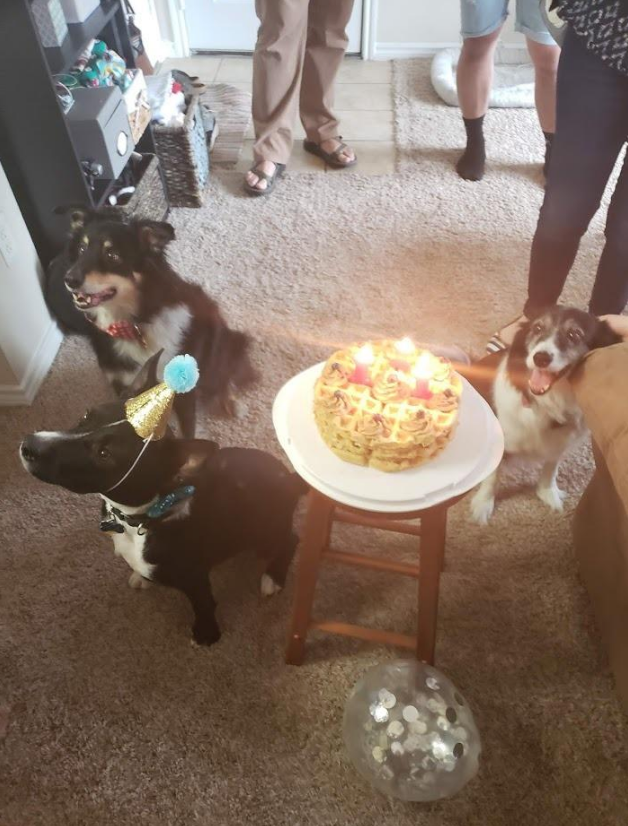 dog bone birthday candles puppy party