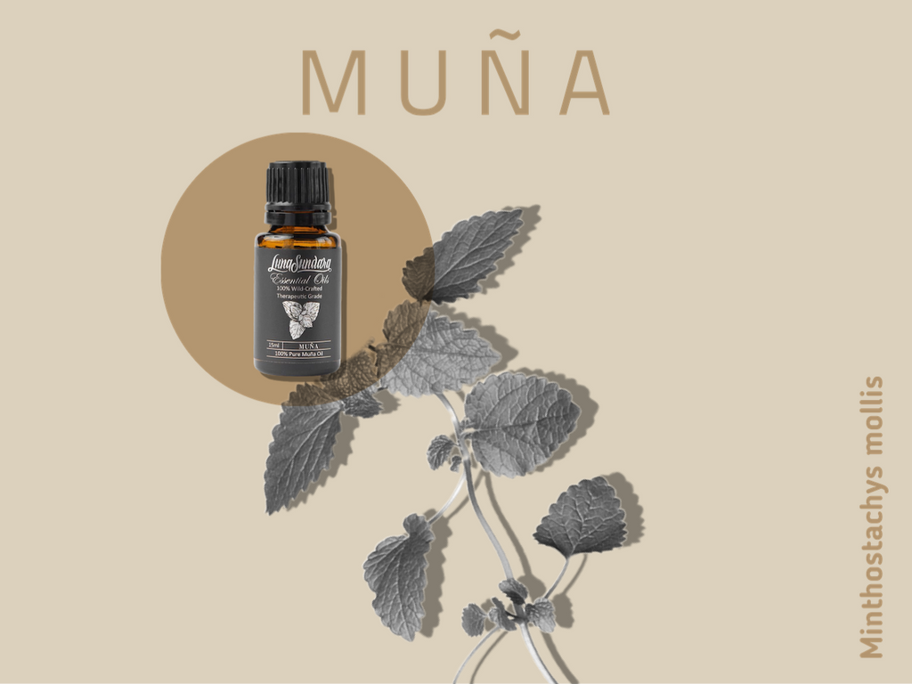 Five Things To Know About Muña, the Andean Mint