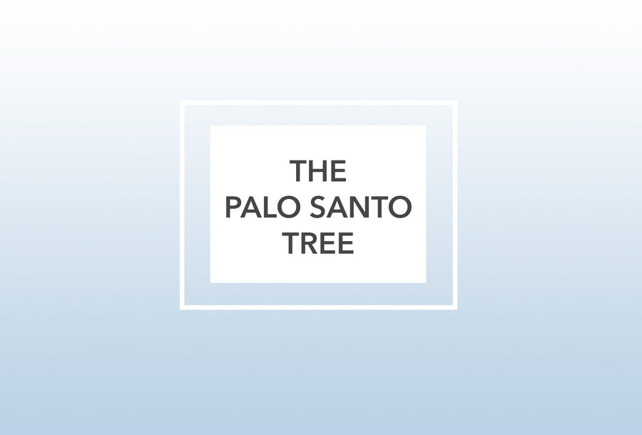 The Palo Santo Tree