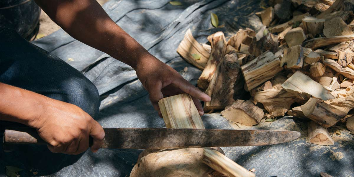 where does palo santo come from luna sundara