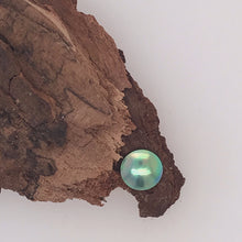 Load image into Gallery viewer, Raw Paua Pearl Grade B