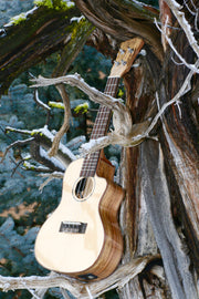 Sound Smith Concert Spruce/Spalted Maple Arched Back Acoustic-Electric Cutaway Ukulele- SSU-SSM23 - SOUND SMITH  Ukulele - Guitar Capo Ukulele - Guitar picks