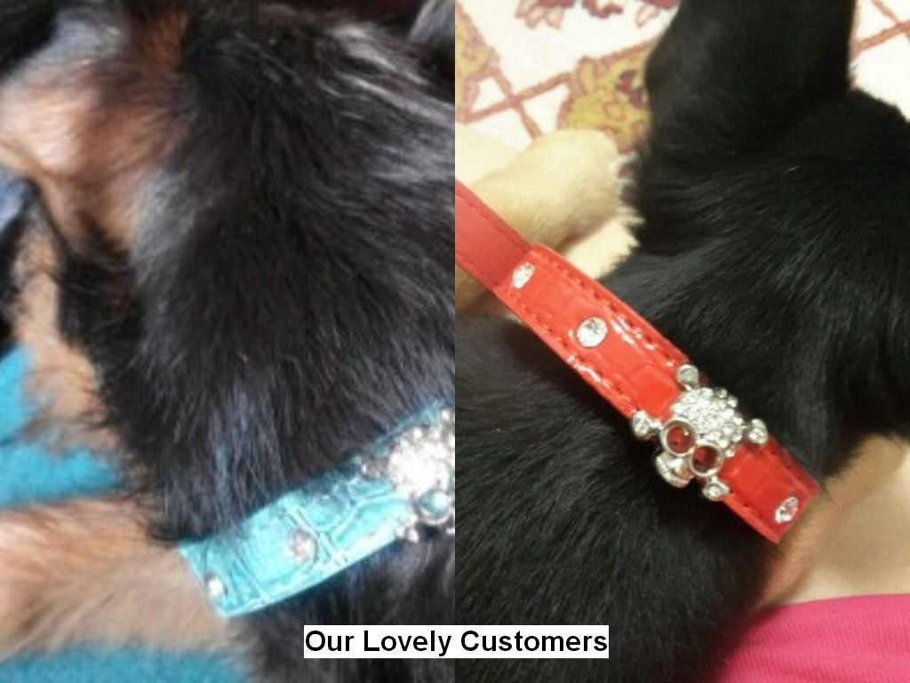 PU Leather Pets Adjustable Collar with Rhinestone and Skull Charm - FOR MY LITTLE ANGELS