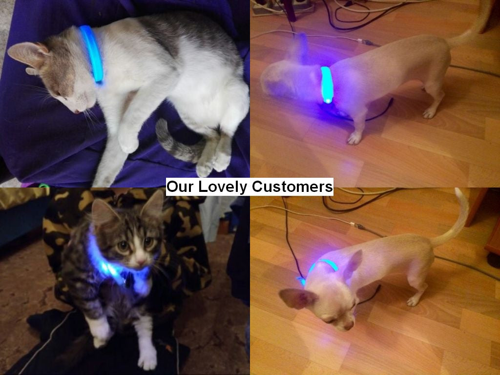 Nylon Pets Collar with LED Glowing Light - FOR MY LITTLE ANGELS