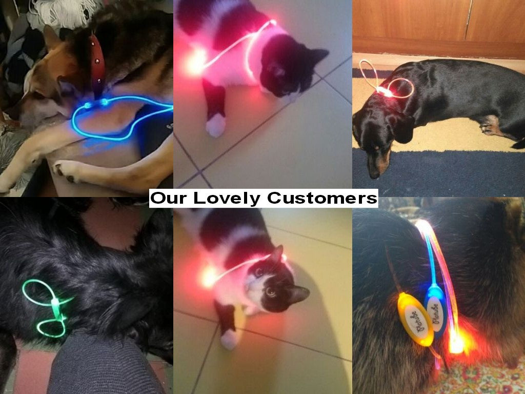 LED Flashing Light Pets Chain Collar - FOR MY LITTLE ANGELS