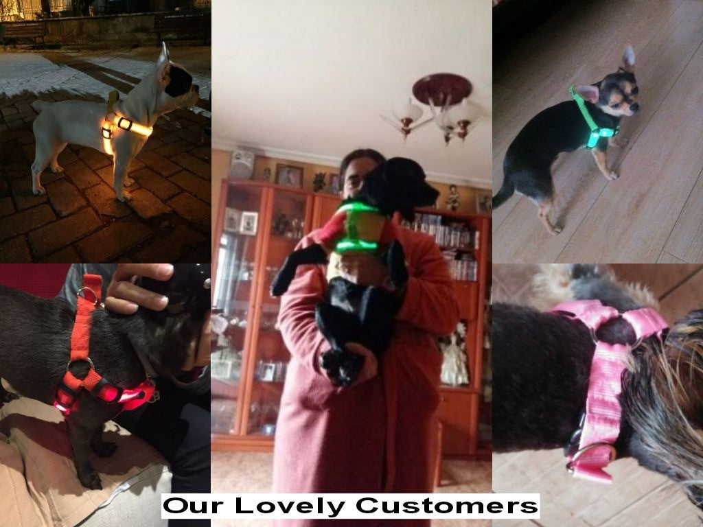 Pets Safety Nylon Collar Harness with Flashing LED Light - FOR MY LITTLE ANGELS