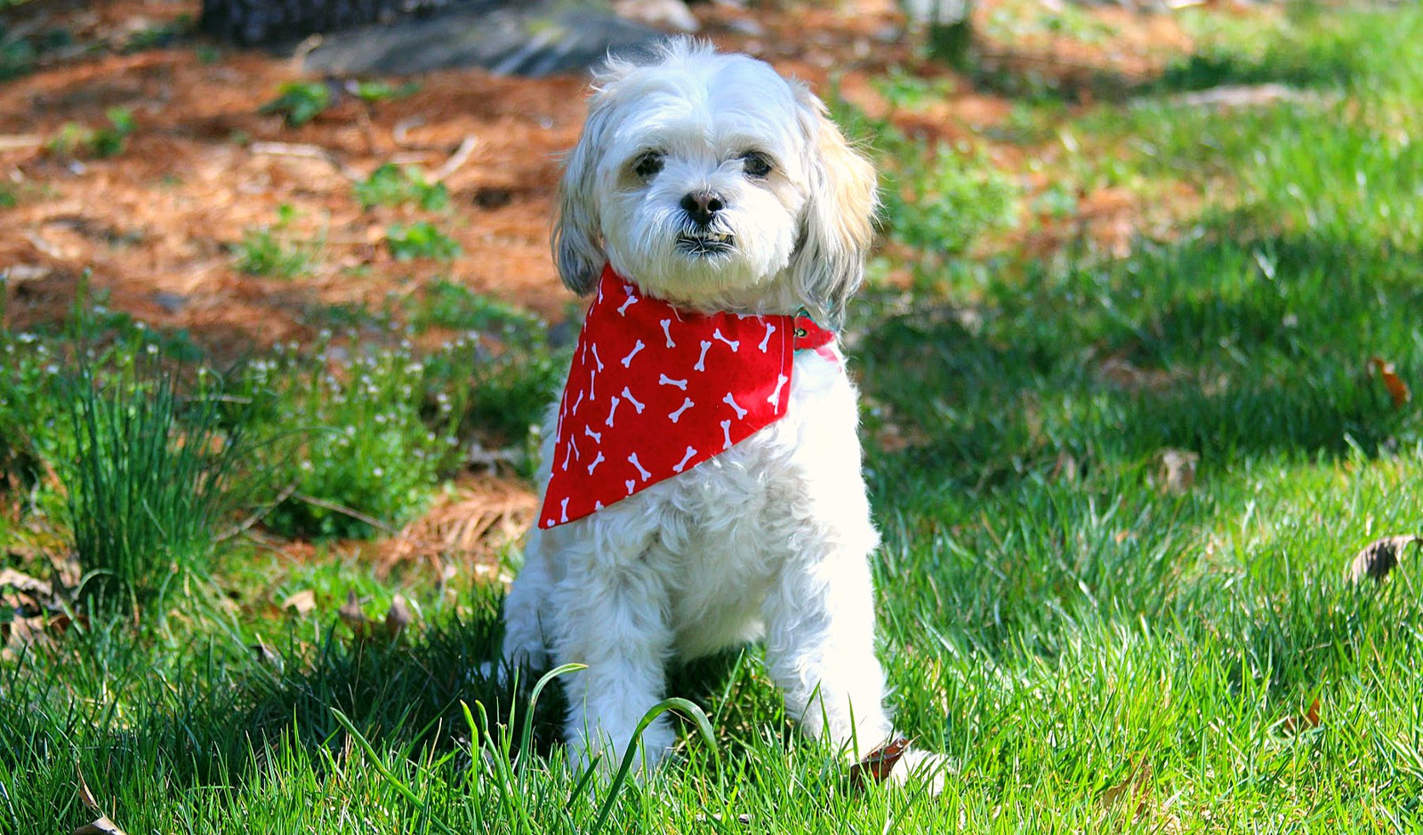 Dog Bandanas - Paisley Paw Designs