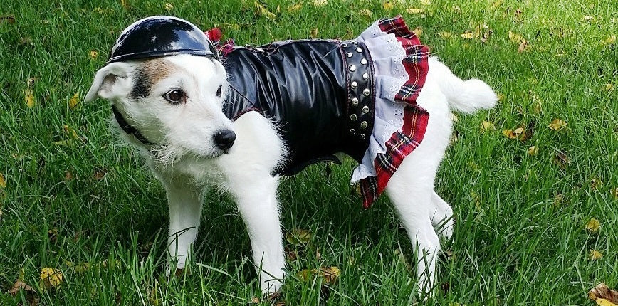 Biker Helmets & Dog Biker Harnesses