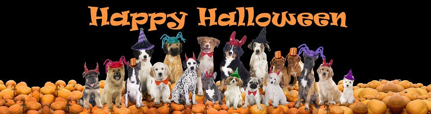 Dog Halloween Products